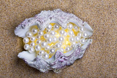 skal för hav för exotiska lies för pärlor pärlemorfärg Fotografering för Bildbyråer