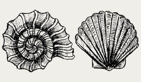 Skal för havssnail och kammussla Arkivbilder