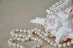 Skal för vitt hav med pärlor royaltyfria foton