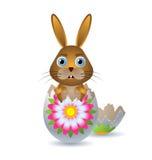 skal för kanineaster ägg Arkivbilder