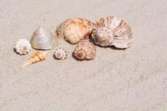 Skal från alla hav av världen på en härlig krabb sand Royaltyfria Foton