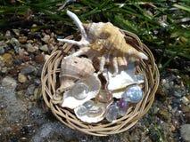 Skal och exponeringsglasstenar i en vide- korg på kusten Royaltyfria Foton