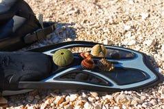 Skal och havsgatubarn på att snorkla fena på en stenig strand royaltyfri foto