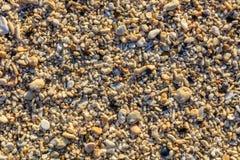 Skal och kiselstenar på en strand, Boracay ö, Filippinerna Royaltyfri Bild