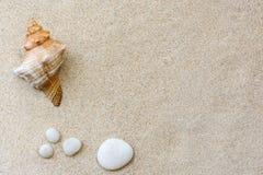Skal och kiselstenar på sanden Arkivfoton