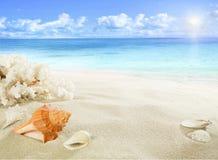 Skal och korall på stranden Arkivfoto