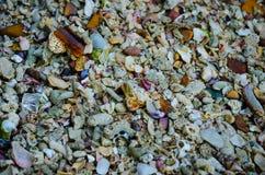 Skal och korall på stranden royaltyfri foto