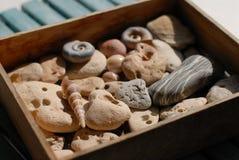 Skal och seastones samlas i en träask arkivfoto