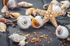 Skal och sjöstjärna på blå träbakgrund Royaltyfri Bild