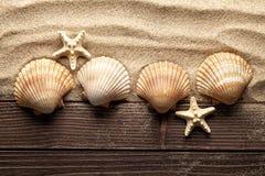 Skal och sjöstjärna på sand och träplankor royaltyfria bilder