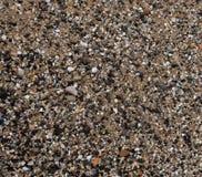 Skal och stenar på sanden Royaltyfria Foton