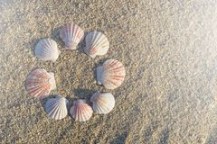 Skal ordnade runt på sand på stranden arkivfoto