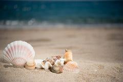 Skal på den sandiga stranden med blå himmel och havet arkivbilder