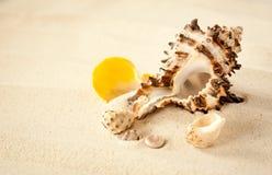 Skal på en krabb sand Arkivfoton