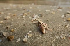 Skal på en strand Royaltyfri Fotografi