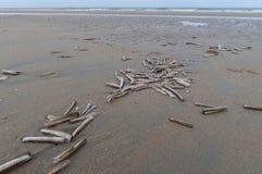 Skal på en tom strand Arkivfoton
