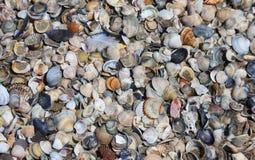 Skal på kusten av stranden Fotografering för Bildbyråer