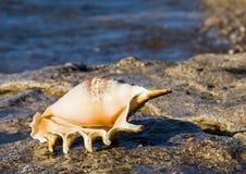 Skal på marin- strand Arkivbilder
