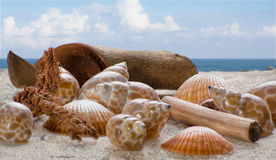 Skal på sanden med bakgrunden av havet och himmel Arkivfoton