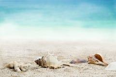 Skal på sandig strand Royaltyfria Bilder