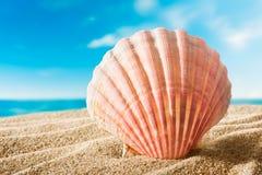 Skal på stranden Royaltyfria Bilder