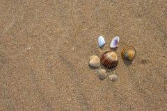 Skal på stranden Fotografering för Bildbyråer