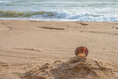 Skal på stranden Arkivbilder
