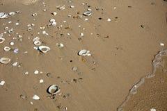 Skal på stranden Arkivfoton