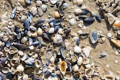 Skal på stranden i sommar Arkivbilder