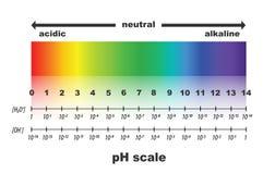 Skala av ph-värde för syrliga och alkaliska lösningar Fotografering för Bildbyråer