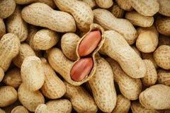 Skalad jordnöt på väl jordnötter Jordnötter for bakgrund eller texturer royaltyfri fotografi