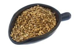 skalad skopa för korn korn Royaltyfria Bilder