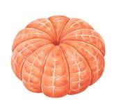 skalad tangerine Arkivfoto