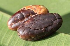 Skalade kakaobönor på ett grönt blad arkivfoto
