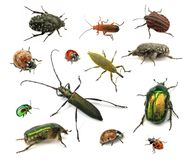 skalbaggar Arkivfoton