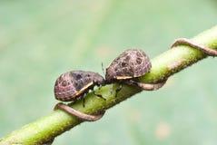 skalbaggar Arkivfoto