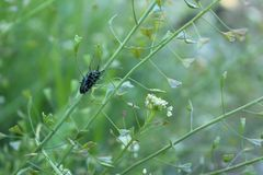 Skalbaggar i grönt gräs Royaltyfri Bild