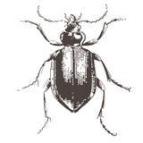 skalbaggar inristade illustrationtappning Arkivbilder