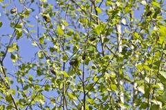 Skalbaggar på ett träd Fotografering för Bildbyråer