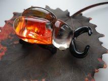 Skalbagge av exponeringsglas på bakgrundsbladet Royaltyfri Fotografi
