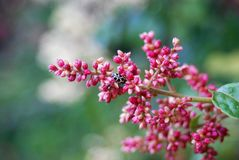 Skalbagge bland blommor Fotografering för Bildbyråer