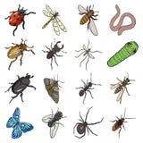 Skalbagge, geting, bi, myra, fluga, spindel, mygga och annan krypart Fastställda samlingssymboler för olika kryp i tecknad film royaltyfri illustrationer