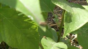 Skalbagge på ett grönt blad i trädgården
