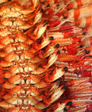 skaldjur Arkivbilder