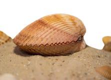 skaldjur Royaltyfri Bild