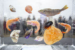 Skaldjur och fisk som frysas i iskub bakgrundsis lines modeller siberia för flod för isjanuari naturlig ob textur 2007 Arkivfoto