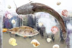 Skaldjur och fisk som frysas i iskub bakgrundsis lines modeller siberia för flod för isjanuari naturlig ob textur 2007 Arkivbilder