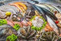 Skaldjur på is på fiskmarknaden, marin- fisk, krabba, räka, bläckfisk, kammusslor arkivfoto