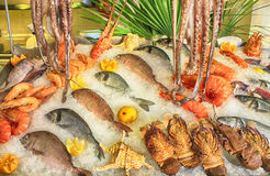 Skaldjur på is på fiskmarknaden Arkivfoto
