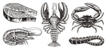 Skaldjur, räka, hummer eller kräfta, laxbiff, krabba med jordluckrare Flod- och sjö- eller havsvarelser sötvatten royaltyfri illustrationer